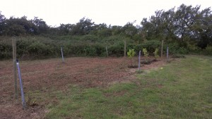 The vinyard!